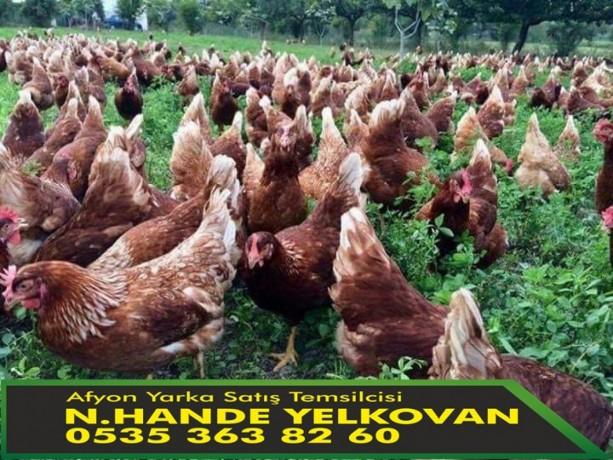 afyon-yarka-lohman-brown-19-haftalik-en-azalim-250-ve-uzeri-big-1